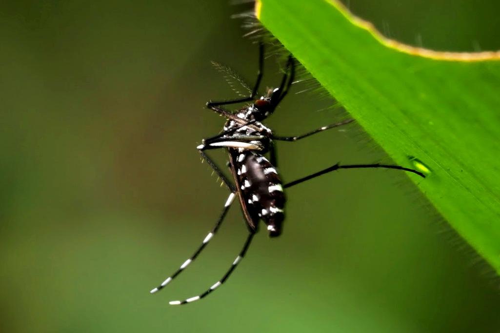 Prevención De Dengue Chikungunya Y Zika