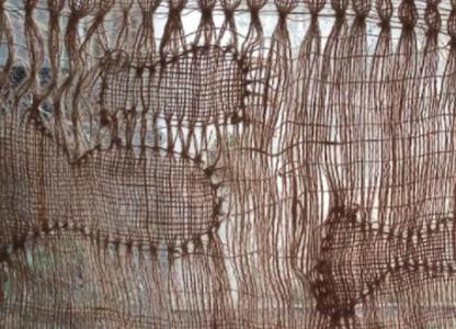 Intervención artística: Abrazar el río
