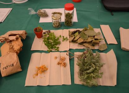 Taller de Salud Integral desde las medicinas tradicionales y naturales