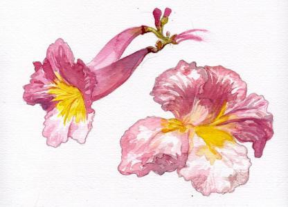 Florecido para mí: experiencia de recolección e ilustración de plantas