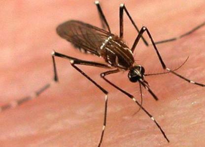 Prevención de enfermedades transmitidas por mosquitos