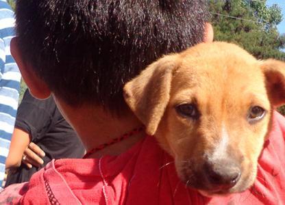 Móvil de Salud Animal en el CMD Oeste