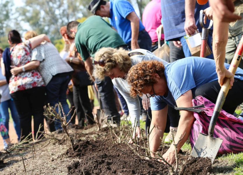 voluntariado_ambiental