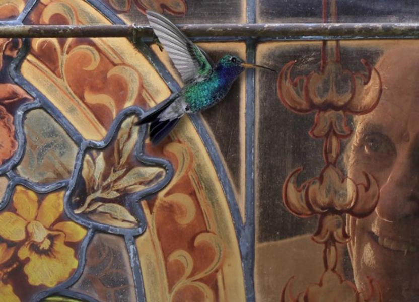La mirada del colibrí