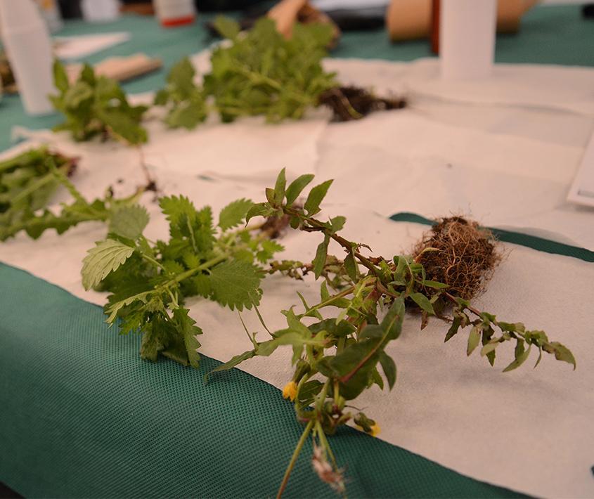 Taller: Preparado con hierbas