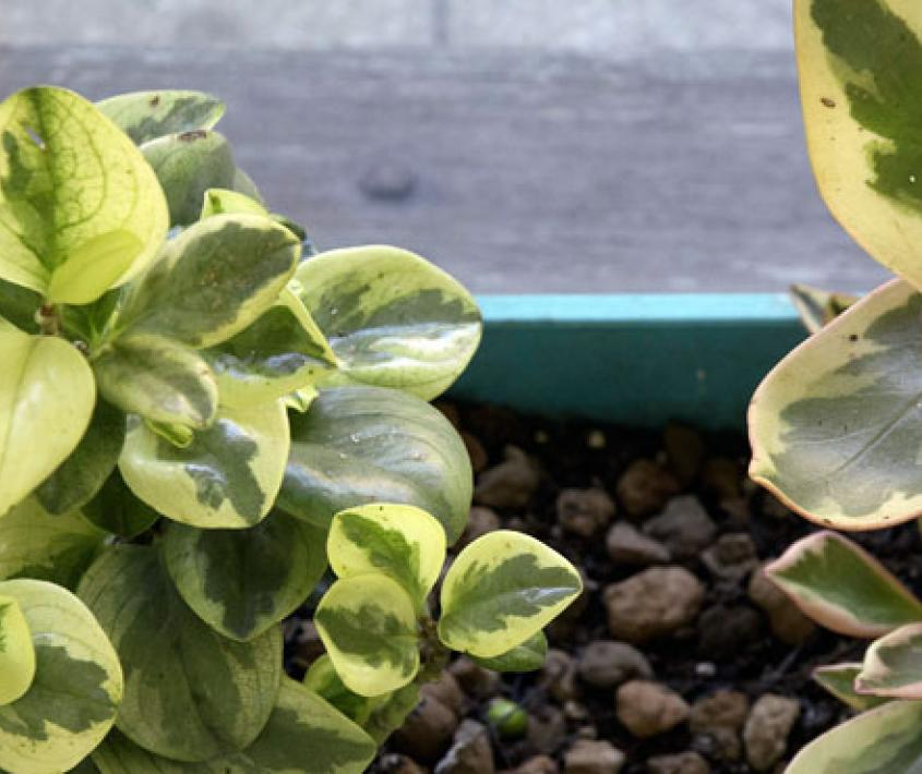 Talleres verdes: plantas de interior