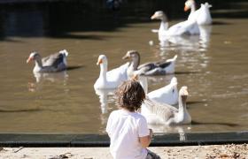 Niño con patos en La Granja de la Infancia