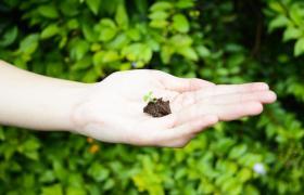 mano sosteniendo una planta