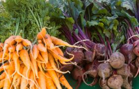 Feria agricultura urbana