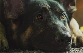Cuidado de mascotas en las fiestas